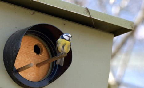Speed trap turned into bird house