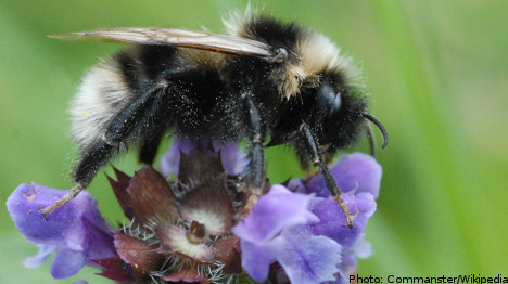 UK researchers: 'we have a permit for the bees'