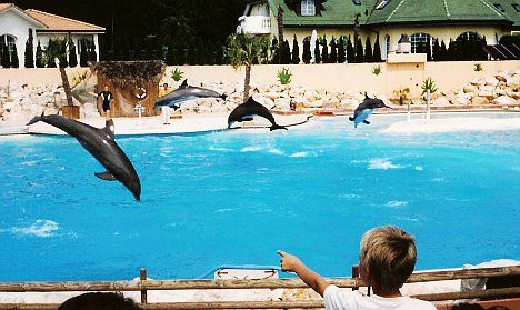 Zoo backs heroin theory in dead dolphins case