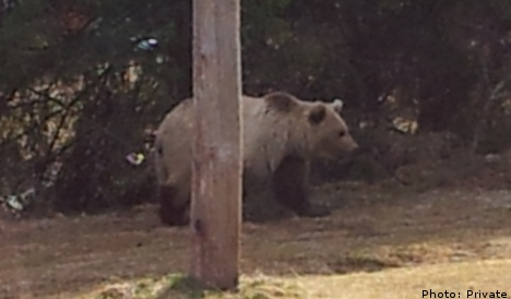 Brave dad chases bear away from curious kids