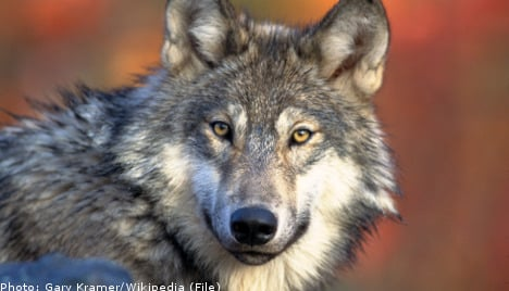 Woman killed by pack of wolves in Swedish zoo