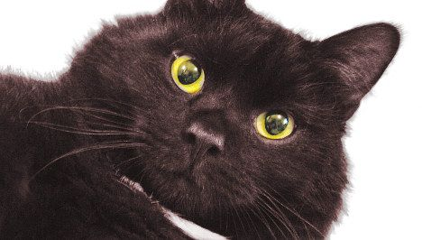Swiss cops face charges over injured cat