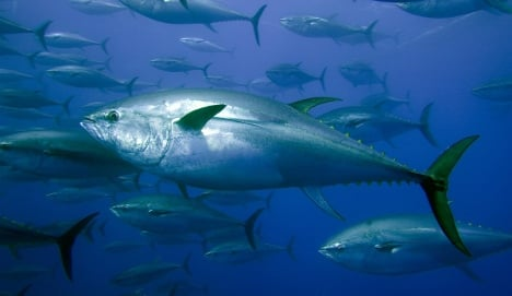Scientists find fish 'compass' cells