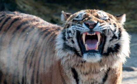 Zoo chief 'had to kill tiger to try to save keeper'