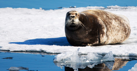 Norway and Canada club together on EU seal ban