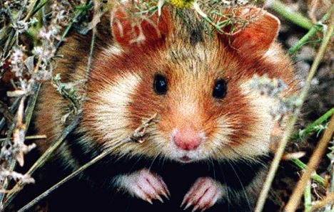 Nearly a third of vertebrate species at risk