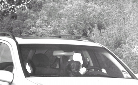 Cops stop speeding car with dog at wheel