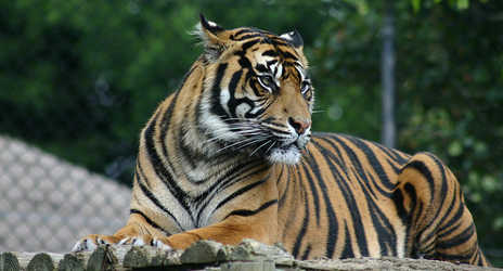 Pensioner killed by tigers at abandoned zoo