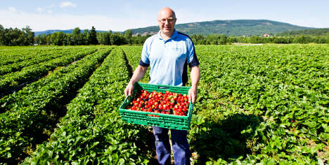 Imports soar along with Norwegians' berry love