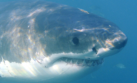 Swimmer who lost arm in Hawaii shark attack dies