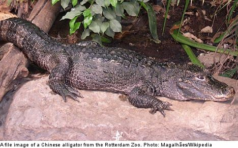 Alligator missing after new Swedish zoo escape