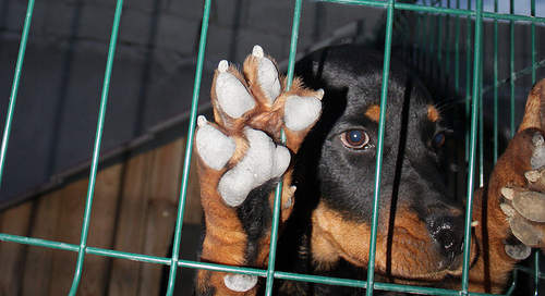 Man fined for drowning caged dog in sea