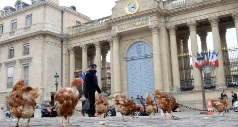 Chickens mob gates of French parliament