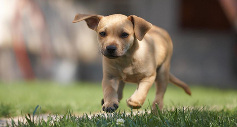 French MP proposes puppy custody law
