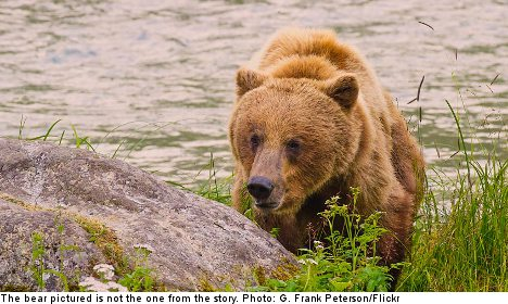 Bear and cubs killed after pensioner attack