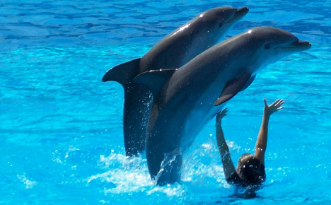 Connyland vet acquitted over dolphin deaths