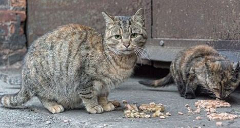 Frenchwoman stung with €500 fine for feeding cats