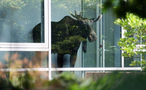 Elk freed from Dresden office building