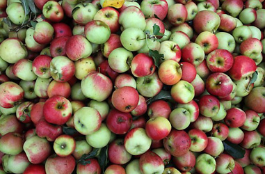 Austrians asked to 'eat more apples'