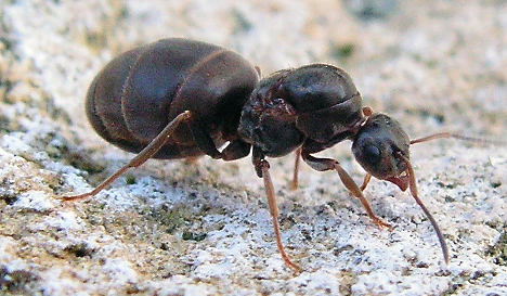 Scientists find that ants have toilets too