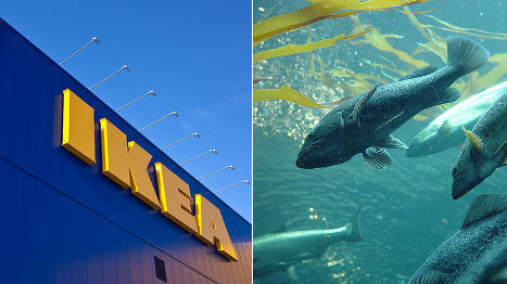 'Salmon is Norway's Ikea', PM claims