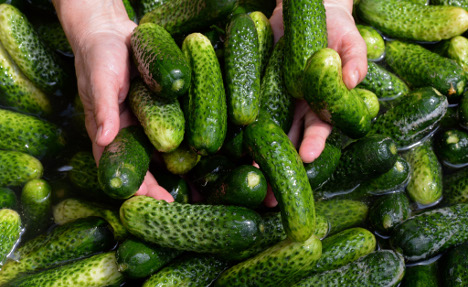Minimum wage threatens Germany's fave pickles