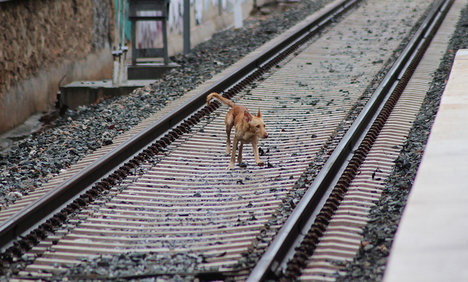 German killed by train in Italy in bid to save dog