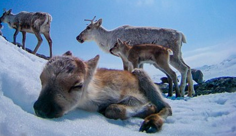 IN PICS: Reindeer take awesome photos on ice