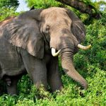 Danish auction house drops ivory after protests
