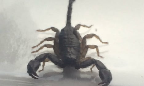 Woman sleeps with scorpion for 3 months
