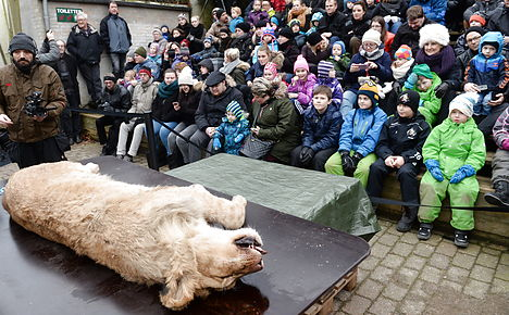 Danish zoo quietly dissects new lion