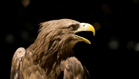Eagle patrol to battle drones over Spain's Royal Palace