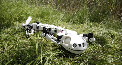 Salamander robot helps Swiss scientists in spinal research