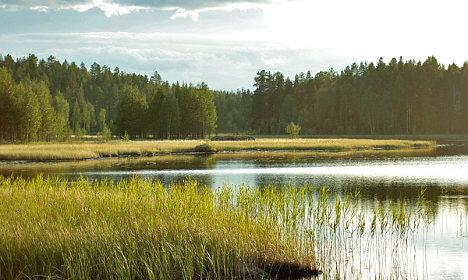 Swedish beach plot for sale for just one krona