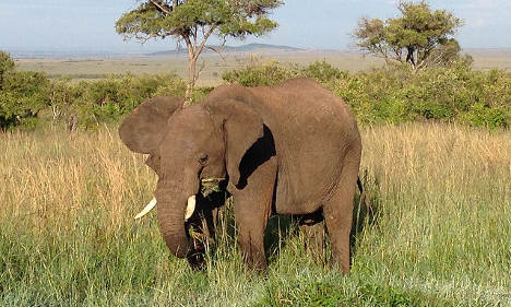 Italian tourist trampled to death by elephant