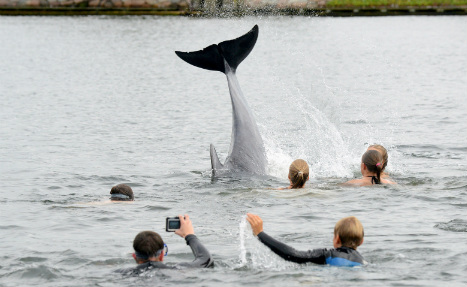 'Lonely' dolphin befriends local children in Baltic Sea