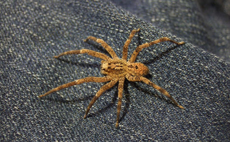 Two new spider species discovered in Munich