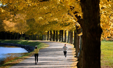 Top six things to do in Stockholm in the autumn
