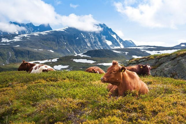 'In Norway, no meat is not an option'