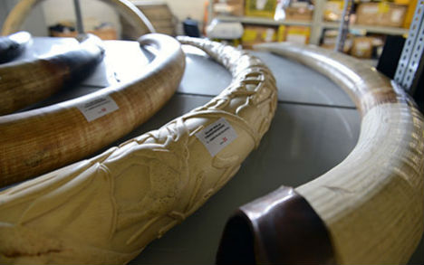 90 illegal elephant tusks discovered in Vienna