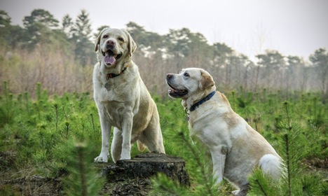 Dogs should be treated like children in divorce cases: Italian lawyer