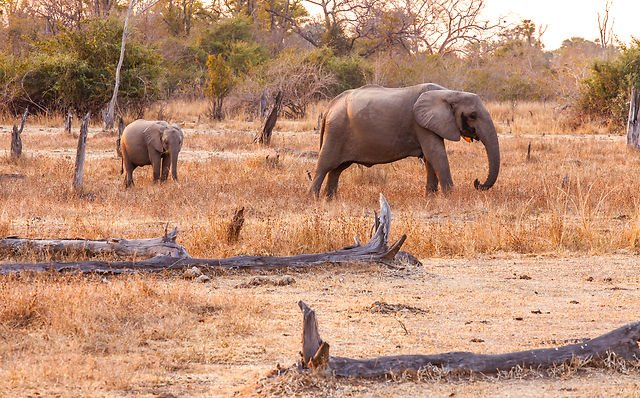 Norwegian dead after elephant attack in Malawi