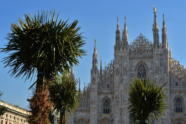 Nice idea or just bananas? Fierce debate over palm trees by iconic Milan Duomo