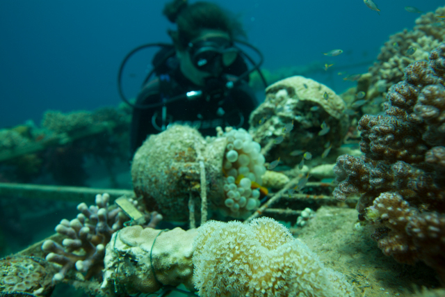 Swiss scientists help discover coral reef that could survive global warming