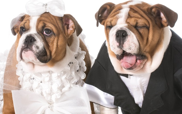 Dogs can't be ring bearers, Italian mayor tells engaged couple
