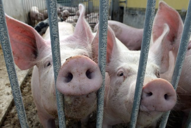 New state farming minister accused of abusing own animals