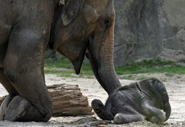 Couple who left Germany after Nazi persecution donate $22 million to Cologne Zoo