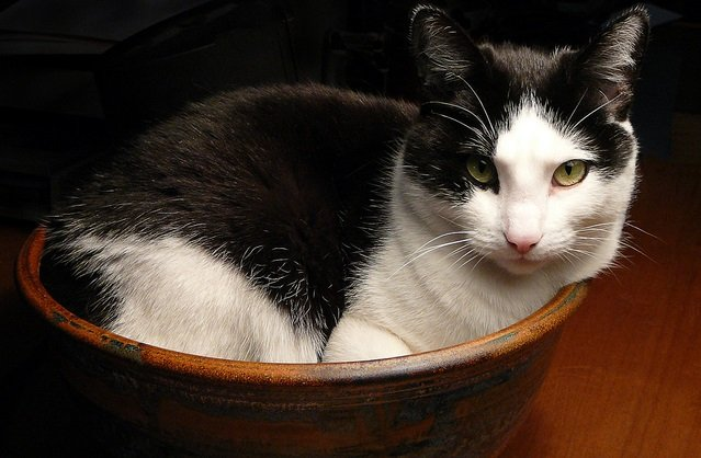 French researchers win 'funny Nobel' for investigating whether cats are both solid and liquid