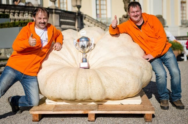 Germany's biggest pumpkin weighs in at almost 800 kilos