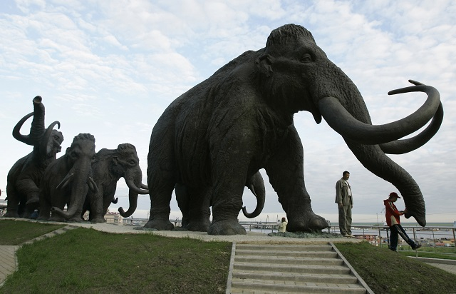 Swedish research reveals why most mammoth fossils are male